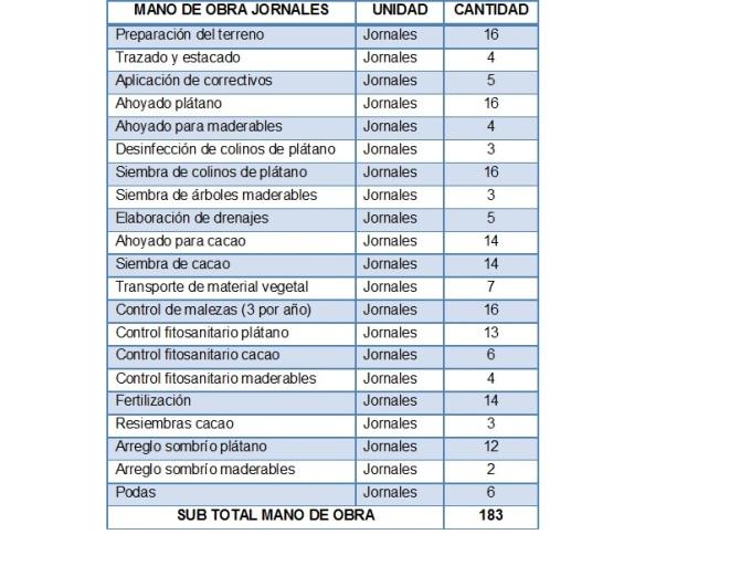 Mano de obra para el establecimiento cacao plátano y maderables año 1, por hectárea. Año base 2008, Colombia.